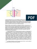 gluconeogénesis s.docx