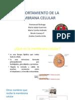 Comportamiento de La Membrana Celular