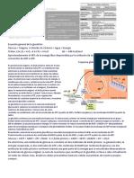 Ecuación general de la glucólisis.docx