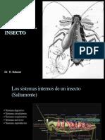 anatomia interna insecto