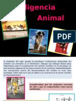 INTELIGENCIA ANIMAL.pptx