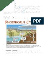 Phosphorus Cycle Info Sheet
