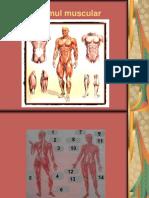 8 Sistemul Muscular