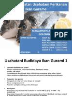 Laporan Praktikum Produksi Ternak