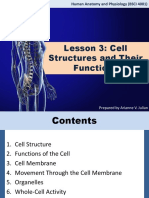 Cell Structures and Their Functions (3)