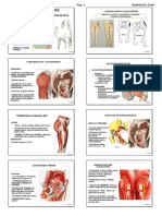 Anatomia-2-LOCOMOTOR-Inferior-USA-2018-ACTUALIZADO-modi-ALU.pdf