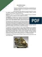 yacimientos-1.docx