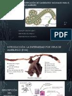 Identificación de Candidatos Vacunales Para El Virus Marburg