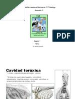 Torax equino comparado.pdf
