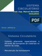 Sistema Circulatório1