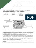Guía Sistema Reproductor Humano.docx