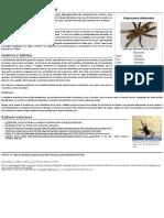 Kukulcania hibernalis.pdf
