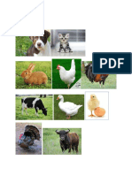 Animales Domestico1