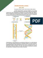 FINAL BiologÃ_a Molecular y Celular