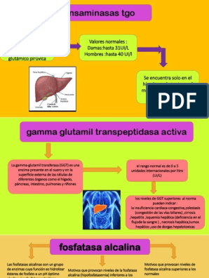 gamma glutamil transpeptidasa alta tratamiento