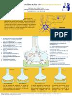 Mecanismo de liberación de neurotransmisores