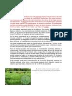 El pasto Brachiaria humidicola sucio resumen.docx