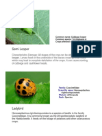 horticulture insects.docx