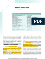 Anatomía del riñón BRENER.pdf