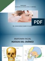 anatomia Facial