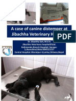 A Case of Canine Distemper at Jibachha Veterinary hospital