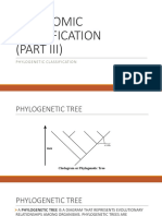Gen Bio II Phylogeny Allen