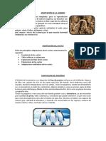 ADAPTACIÓN.docx