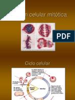 17 División celular mitótica