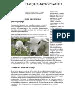 Optimizacija Fotografija Radi Objavljivanja Na Web-u