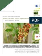 Aroeira - Como Fazer e Usar Chá, Banho e Sabonete - GreenMe.com.Br