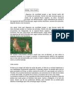 DEFINICIÓN DEANIMAL SALVAJE.docx