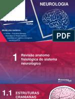 AVC - Aula I - Neuroanatomia