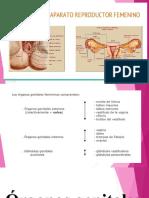 diapostitivas anatomia1-1