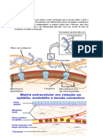 Histologia - Epitélio.docx