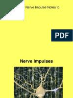 9_05 Nerve Impulses