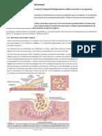 Fisiología del musculo