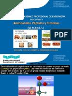 SEMANA 13-15_Aminoacidos Peptidos y Proteinas.pptx
