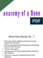 1. Anatomy of a Bone (10 files merged).pdf
