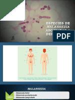 Especies de Malassezia Asociadas a Dermatosis