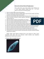 9 Contoh Hewan Invertebrata Beserta Penjelasannya.docx