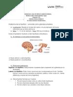 Hipofisis Electiva Medica II