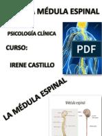 Primera Parte Medula Espinal
