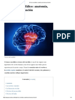 El Tronco Encefálico_ Anatomía, Estructuras y Función