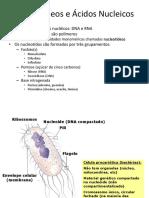 Nucleotídeos e Ác Nucleico Aula Principal