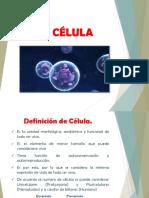 CELULAS-ORIGINAL.pptx