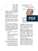 LOS MÚSCULOS DE LA CARA.docx