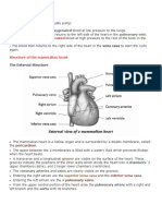 The Heart.docx