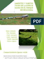 Comportamientos y Habitos Alimenticios de La Especie Iguana