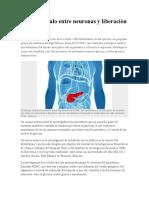 Hallan Vínculo Entre Neuronas y Liberación de Insulina