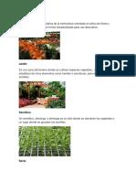 Floricultura y Otros